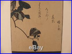 Japanese Woodblock Print Bird And Flower By Hiroshige